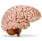 photo-brain